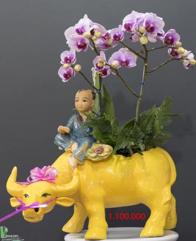 Chậu trâu kéo hoa lan 082